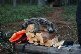 bestes trockenes Feuerholz