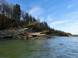 Treibholz vom letzten Hochwasser