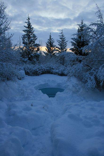 unser Pool im verschneiten Garten