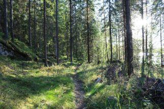 Wanderweg zur Wildnishütte