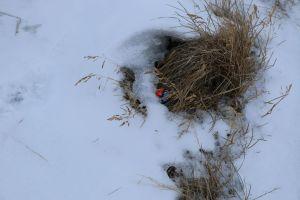 Vor der Reise mussten wir den Kindern vielfach versichern, dass der Osterhase uns auch in Grönland findet