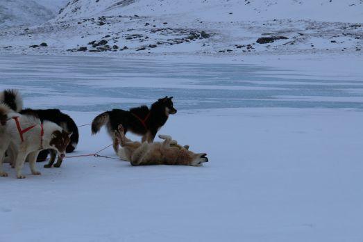 die Hunde genießen die Pause