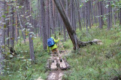 Holzbohlen helfen über nasse Stellen
