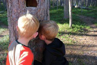 die Kinder erkunden ein Vogelnest in einer Baumhöhle