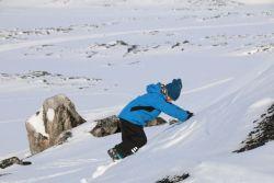 ...und klettert steile Schneefleder hinauf: warum den auch den einfachsten Weg nehmen?