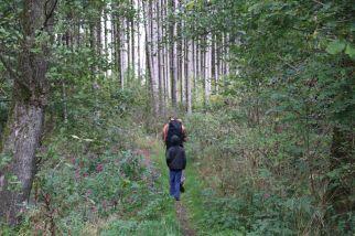 schmaler Waldpfad