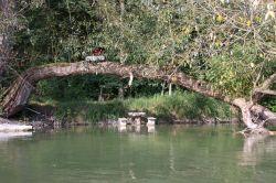 mit Liebe eingerichteter Platz im Fluß