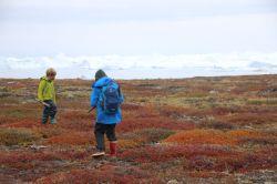 die Tundra hat sich intensiv rot und orange verfärbt