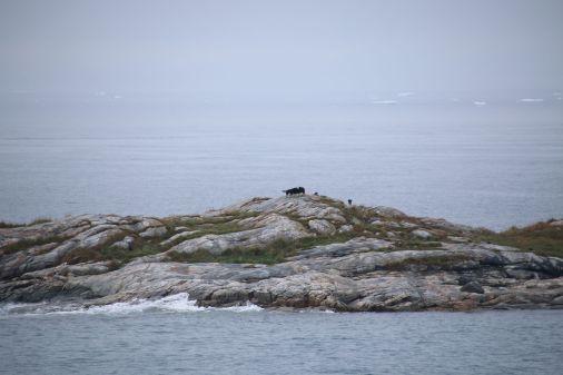 kleine Insel mit Schlittenhunden