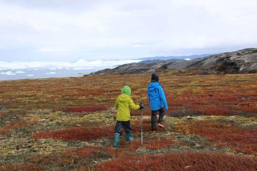 wandern durch die bunt verfärbte herbstliche Tundra