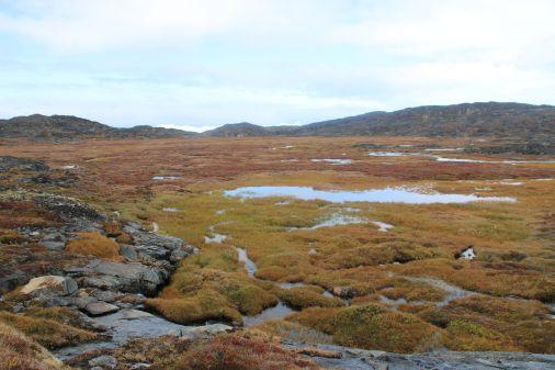 Sumpfgebiet - hier müssen wir durch