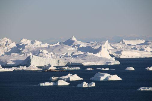 Eisberge im Morgenlicht