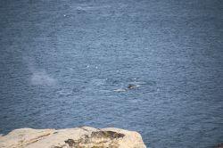 ein letzer Gruß von einem Wal
