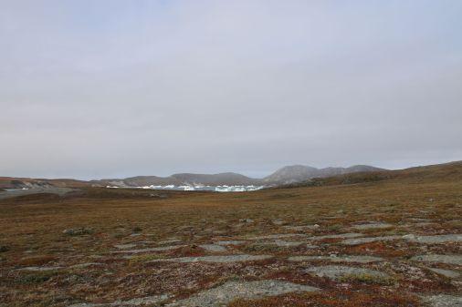 Eisberge auf dem Fjord