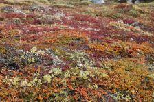 herbstliche Tundra - wie anders sah das noch bei unser Anreise aus