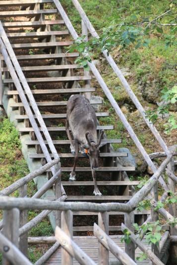 die Treppe ist ihm dann soch unheimlich und es kehrt um