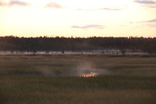 aus dem Sumpf steigt Nebel auf